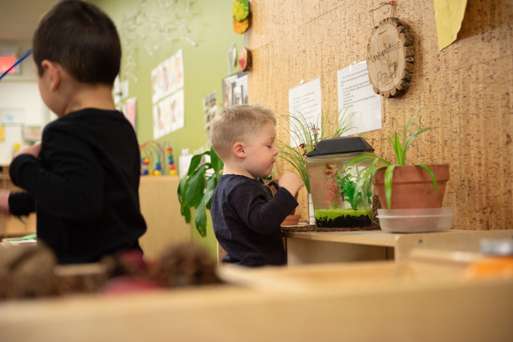 Toddlers exploring plants in a Summerside location room
